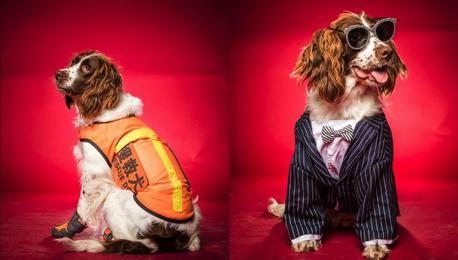 杭州搜救犬集体变装 赫赫战功的它们瞬间萌萌哒