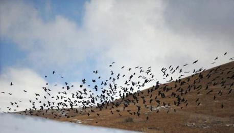 若尔盖大草原迎降雪 游客惊喜雀跃