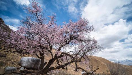 山寺桃花盛开时,最美西藏四月天