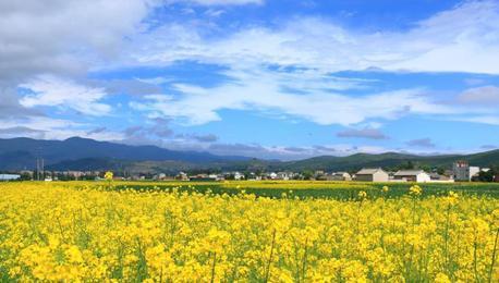 甘肃中部乡村盛夏时节尽显西北田园风
