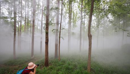 """水雾飘渺似仙境 """"活化石""""水杉林成网红"""