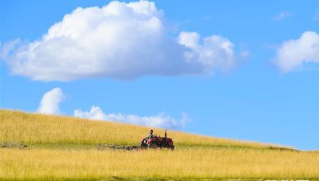 内蒙古锡林郭勒:草原迎来打草季