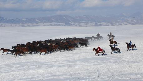 新疆昭苏天马驰骋雪域 吸睛摄影爱好者
