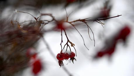 一夜冬雪入梦来  美翻大东北