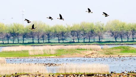 武汉府河湿地候鸟云集