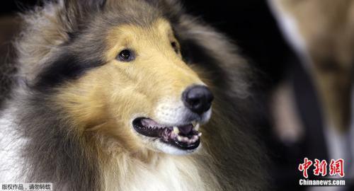 资料图片:狗。