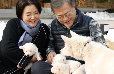 视频:金正恩送的丰山犬生下6只小幼崽 文在寅开心