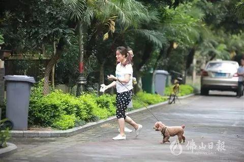近三年5万多人被狗咬伤 广东佛山要推狗主扣分制