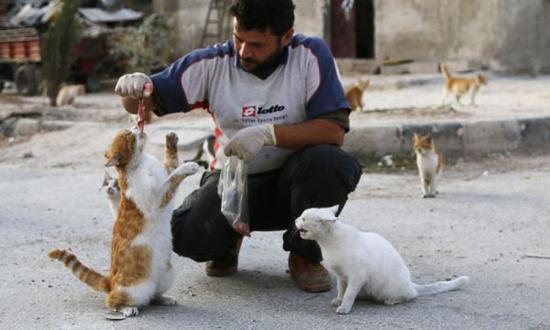 """资料图片:""""阿勒颇猫人""""穆罕默德与他的猫。(图片来源于网络)"""