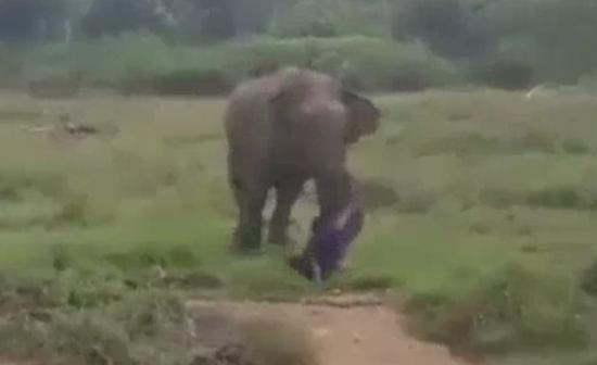 视频:男子试图催眠大象 却被活活踩死