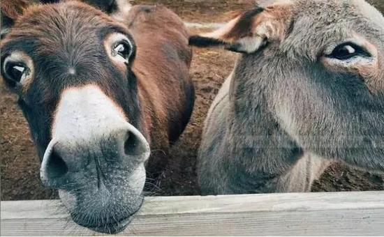 布隆迪退回法国捐赠的10头驴:把我们看成驴