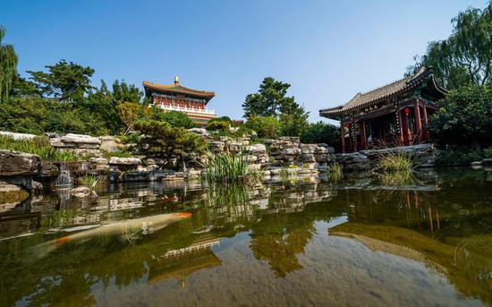 园专园内真景。本届戏直文明周将增进中国园林文明取戏直艺术相交融。拍照/新京报记者 陶冉