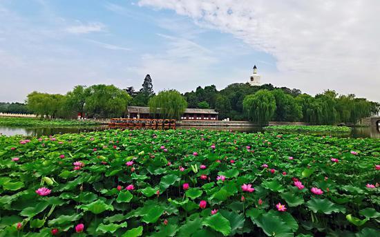端午北京市属公园推13项线上活动 不再举办线下活动图片