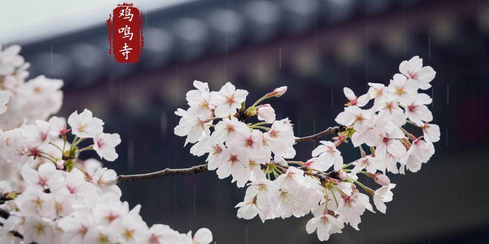 珠海视线爱拍周选特刊:春来了