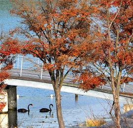 上海辰山植物园层林尽染 秋末初冬观叶赏花两不误