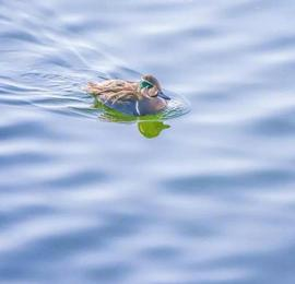 为这只罕见的网红鸟 北京的摄影爱好者全去北海了