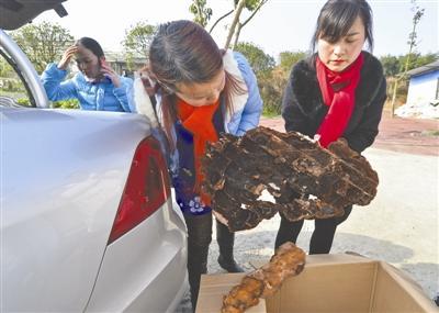 李女士一家在祖祖棺材上取下的大菌子