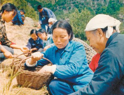 1981年9月,申纪兰参加西沟村植树造林活动。资料照片