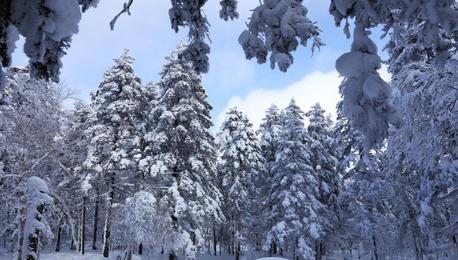 雾凇林海装点高山雪原美景