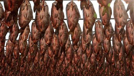 杭州一水产厂晾鱼干 密密麻麻场面壮观