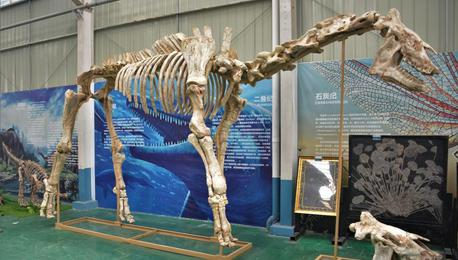陆地上最大哺乳动物巨犀化石在四川成功修复