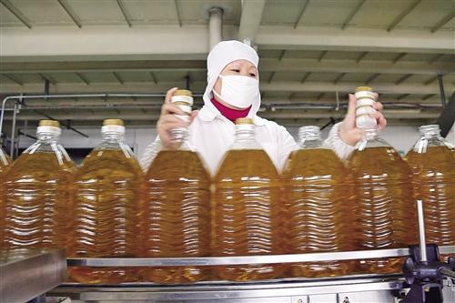 1月7日,山东博兴县山东渤海实业股份有限公司灌装车间,员工在包装食用油。陈 彬摄