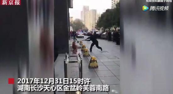 ▲民警棒杀伤人金毛犬。图片来自新京报动新闻视频截图