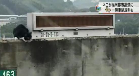 日本福冈都市高速公路惊现一只猫(来源:日本NHK新闻)