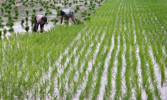 国土资源部发文称,以守住永久基本农田控制线为目标,确保到2020年,全国永久基本农田保护面积不少于15.46亿亩。