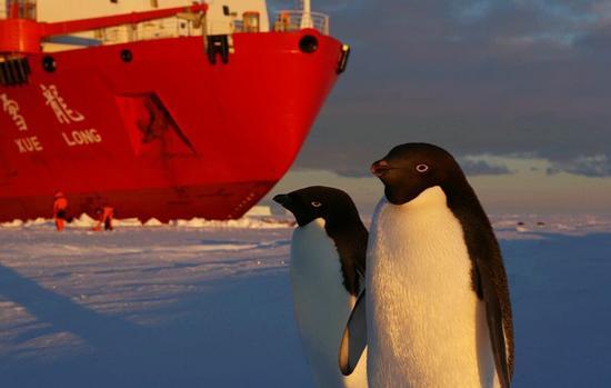"""▲南极企鹅好奇围观中国""""雪龙号""""科考船。"""