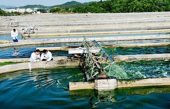 生物科技企业员工在查看微藻培育情况。视觉中国 资料图