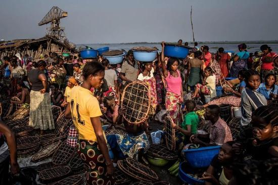 ▲刚果河岸边的丛林肉市场:猎杀成年黑猩猩后,偷盗者会将它们作为丛林肉出售 图据《纽约时报》