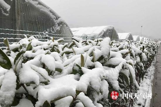 昨天,湖北十堰丹江口出现明显积雪。(图/李梦蓉)