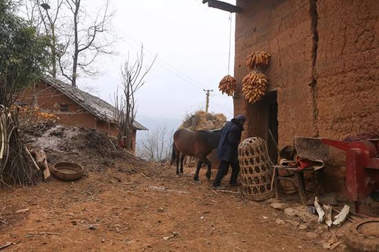 家家户户养着牛马。