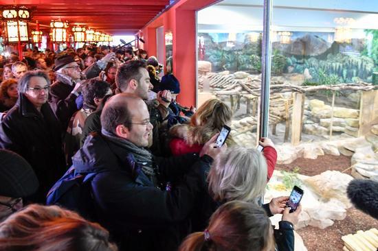 """1月13日,游客在博瓦勒野生动物园观看大熊猫宝宝""""圆梦""""。(新华社记者陈益宸摄)"""