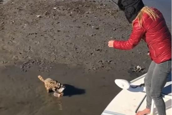 大胆浣熊抢夺女子渔获 上演精彩拉锯战