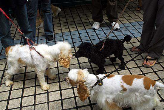 海口明珠广场拍摄的几只等候免费打狂犬疫苗的宠物狗。视觉中国 资料图