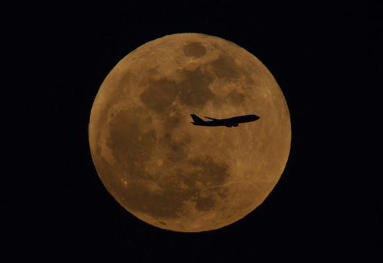 ▲1月31日,北京朝阳,月亮刚刚升起,一架客机穿过大月亮 新京报记者 陶冉 摄