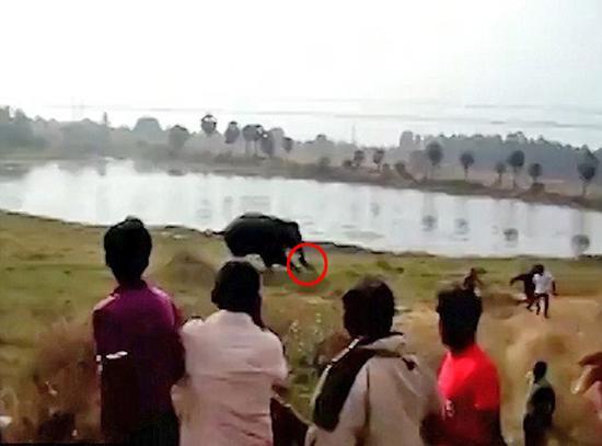 印度发生人象冲突致1人被踩死 政府赔偿