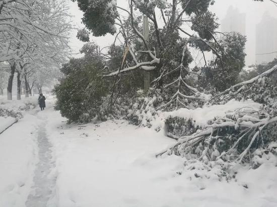 △安徽蚌埠遭遇暴雪袭击 市区交通受阻严重