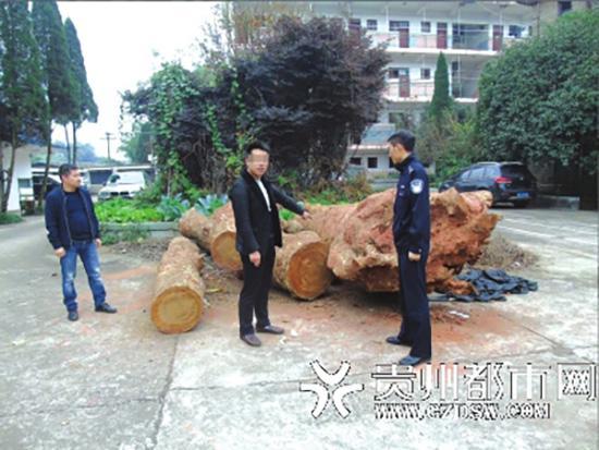 一名犯罪嫌疑人指认盗伐桢楠古树现场。