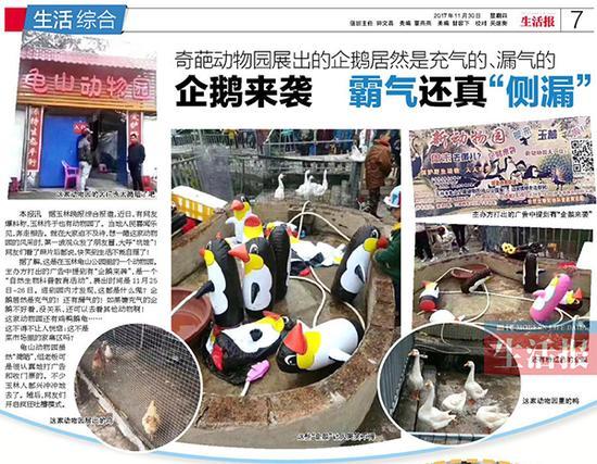 """11月30日,当代生活报曾报道玉林龟山动物园的""""企鹅展""""事件。"""