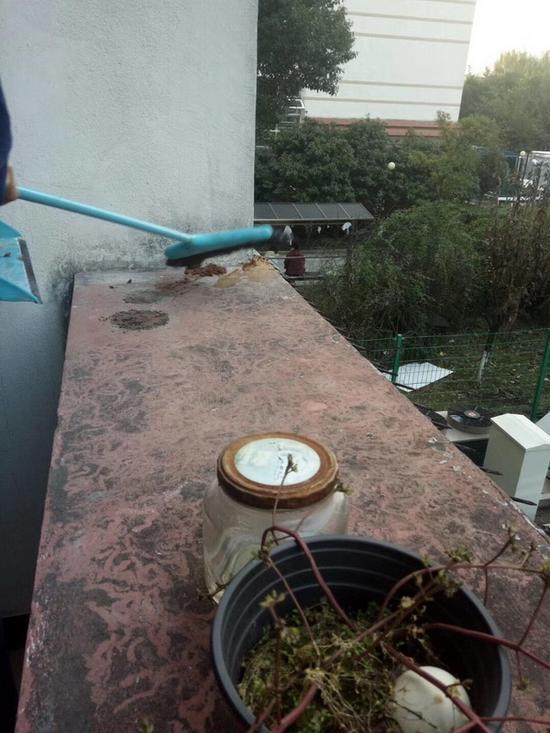 落在小李宿舍阳台上的粪便。