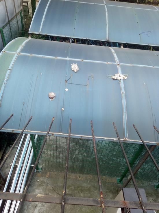 落在宿舍楼下车棚顶的袋装粪便 本文图均为 受访人供图