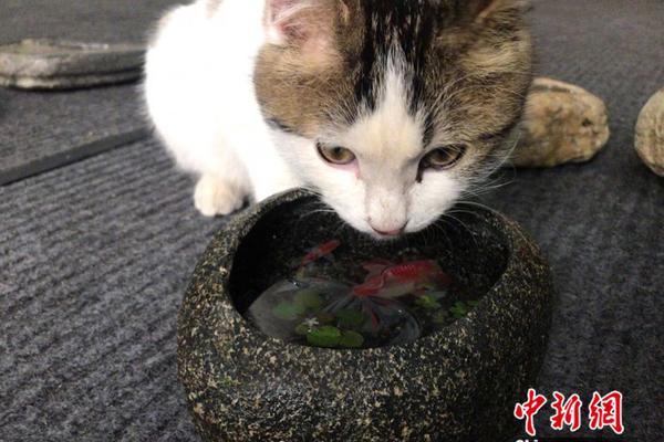 中国野生鸟类摄影行为规范倡议