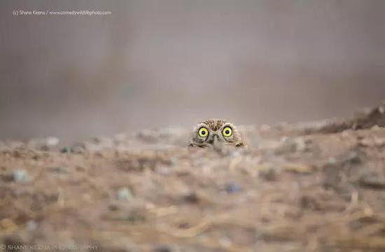 青少年 / 自然的呼唤 / Arshdeep Singh