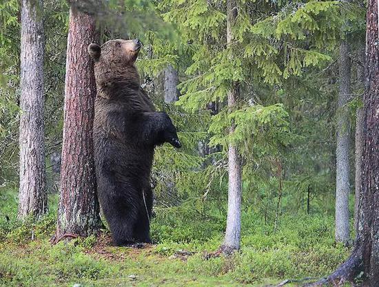 这只熊请了一天假