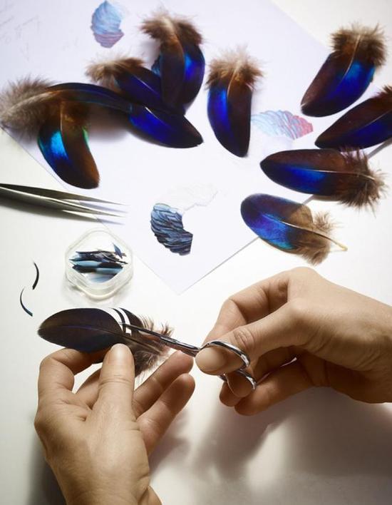 然后将羽毛在在肥皂水中洗涤,而后以蒸汽整形。