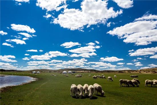 """自治區政府召開""""內蒙古味道——內蒙古綠色農畜產品展覽交易"""