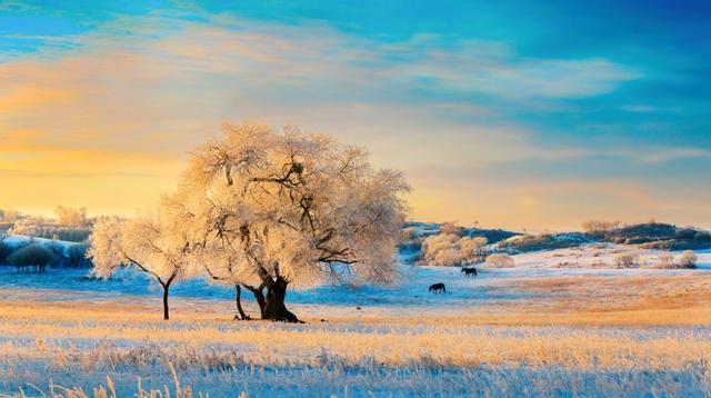 冬天给予北方最好馈赠